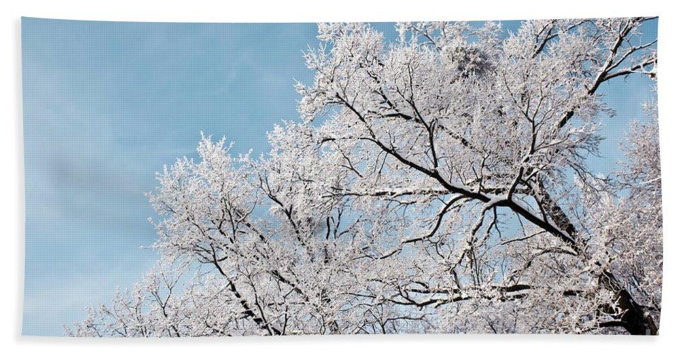 Abstract Bath Sheet featuring the photograph Winter Tree Scene by Dan Radi