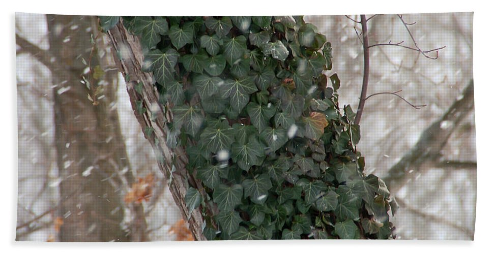 Vine Bath Sheet featuring the photograph Winter Vine by Aimee L Maher ALM GALLERY