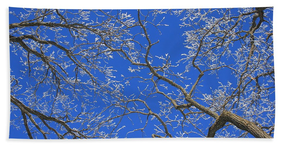 Winter Hand Towel featuring the photograph Winter Wonderland by Penny Meyers