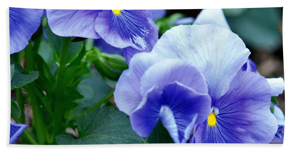 Winter's Blue Pansies Bath Sheet featuring the photograph Winter's Blue Pansies by Maria Urso