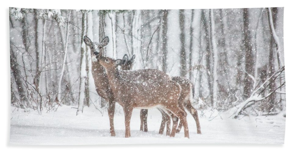 Deer Bath Towel featuring the photograph Winters Love by Karol Livote