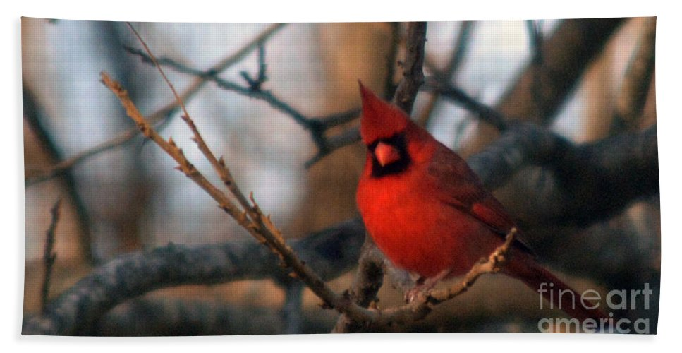 Cardinal Photographs Hand Towel featuring the photograph Northern Cardinal Red Beauty by Barb Dalton