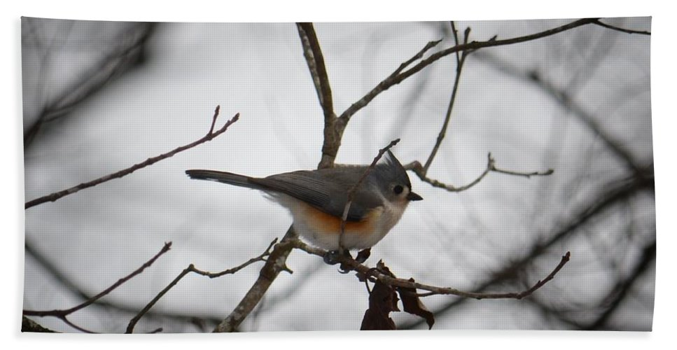 Winter's Tufted Titmouse Bath Sheet featuring the photograph Winter's Tufted Titmouse by Maria Urso