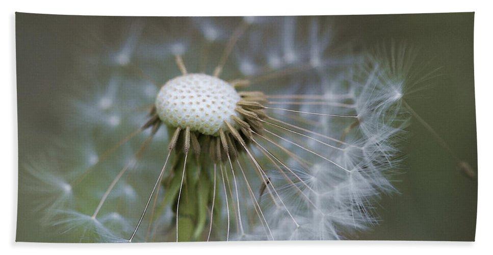 Dandelion Bath Sheet featuring the photograph Wispy Dandelion Fluff by Kathy Clark