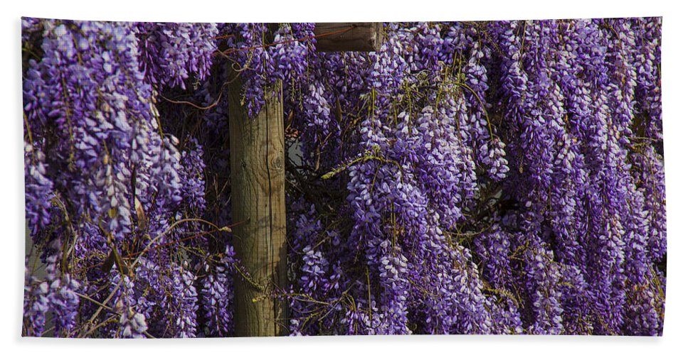 Wisteria Bath Sheet featuring the photograph Wisteria by Garry Gay