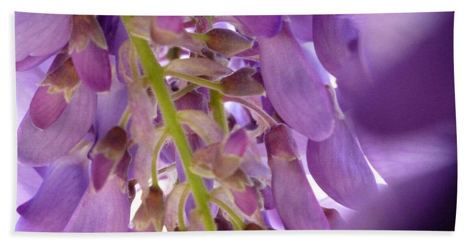 Purple Hand Towel featuring the photograph Wisteria Macro 1 by Claudia Goodell