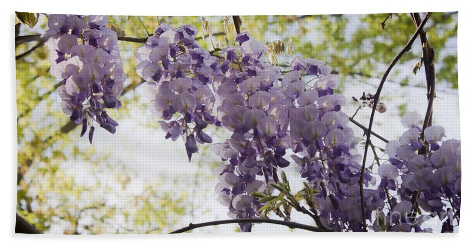 Wisteria Hand Towel featuring the photograph Wisteria Row by Teresa Mucha