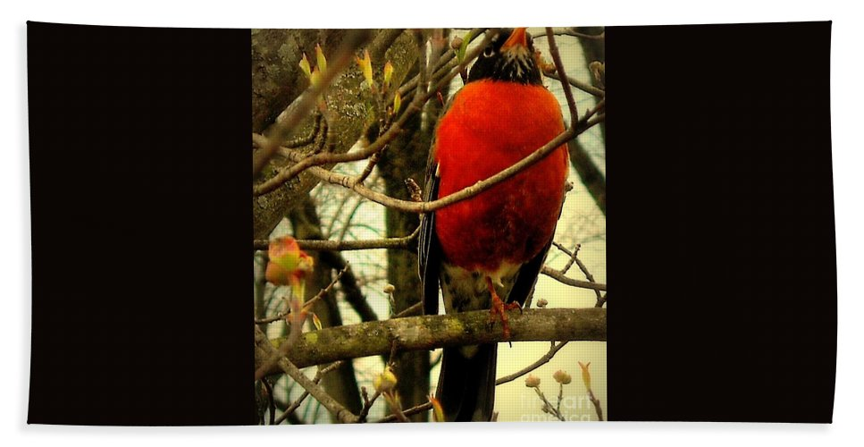 Robin Hand Towel featuring the photograph With A Song In My Heart by Tami Quigley
