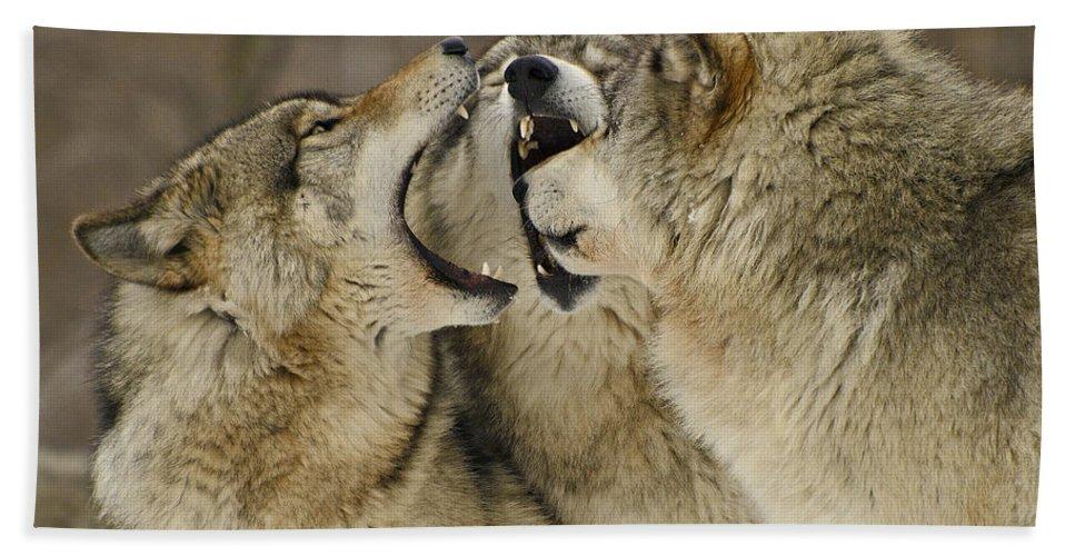 Animalia Bath Sheet featuring the photograph Wolf Display by Joshua McCullough