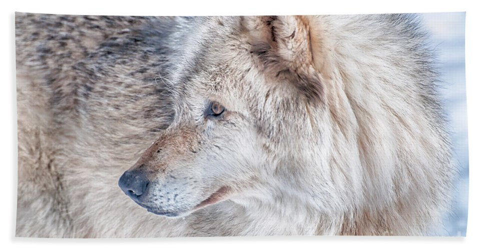 Timberwolf Hand Towel featuring the photograph Wolf In Disguise by Bianca Nadeau