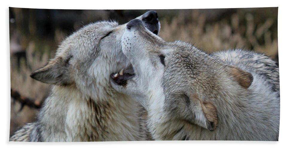 Wolves Bath Sheet featuring the photograph Wolves Playing by Athena Mckinzie