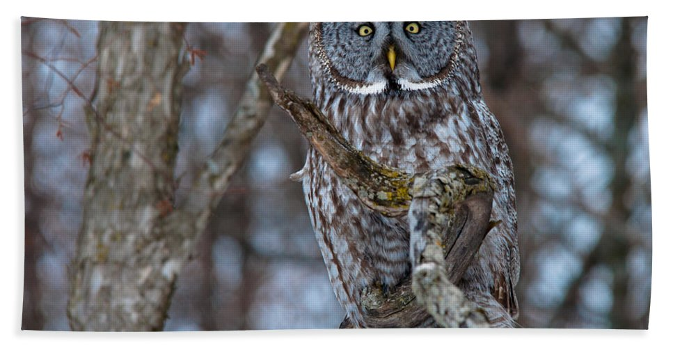 Owls Hand Towel featuring the photograph Wonderful Great Gray by Cheryl Baxter