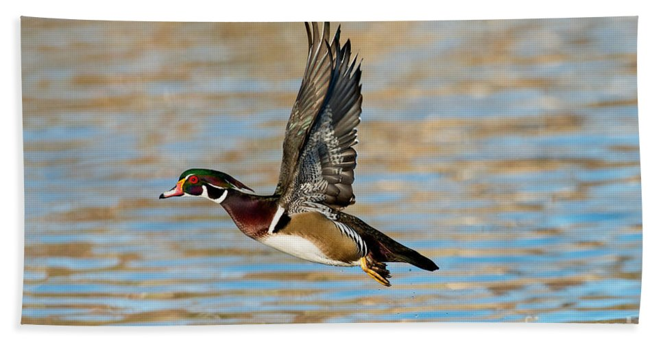 Wood Duck Hand Towel featuring the photograph Wood Duck Drake by Anthony Mercieca