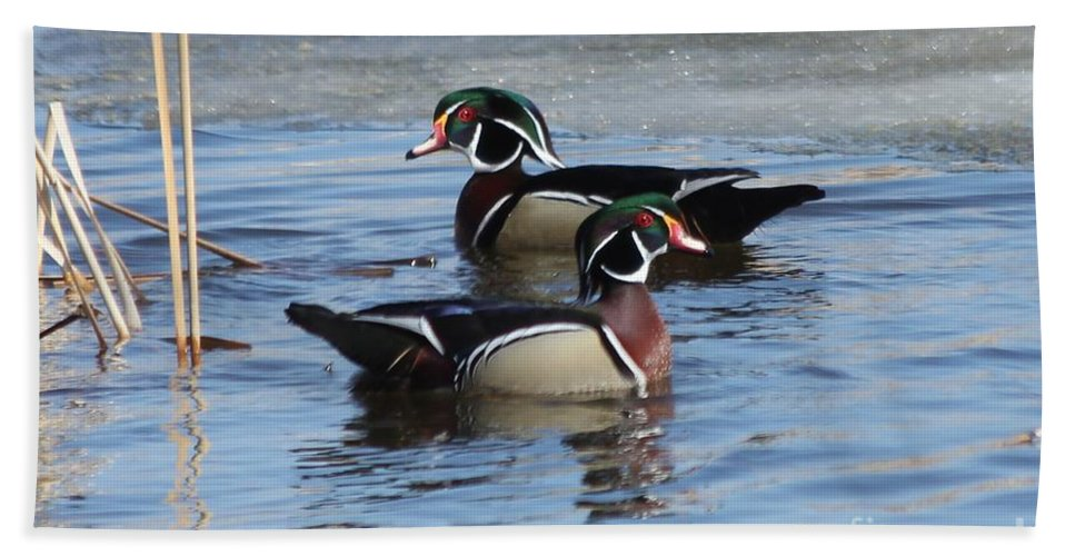 Wood Duck Hand Towel featuring the photograph Wood Duck Drake Pair by Lori Tordsen