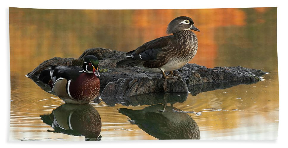 Wood Ducks Bath Sheet featuring the photograph Wood Ducks by Dale Kincaid