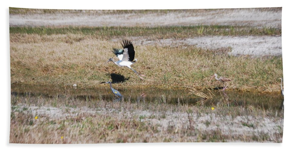 Taking Flight Hand Towel featuring the photograph Wood Stork And Herons by Robert Floyd