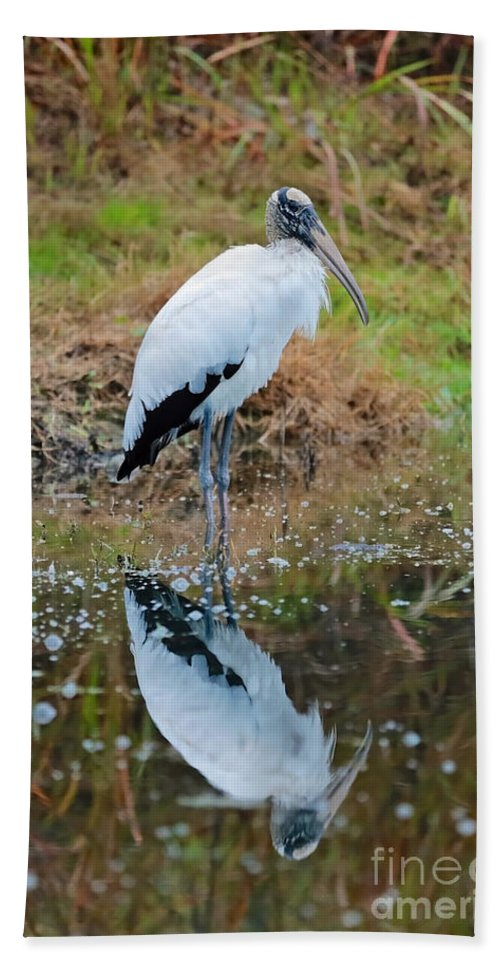 Wood Stork Hand Towel featuring the photograph Wood Stork by Carol Groenen