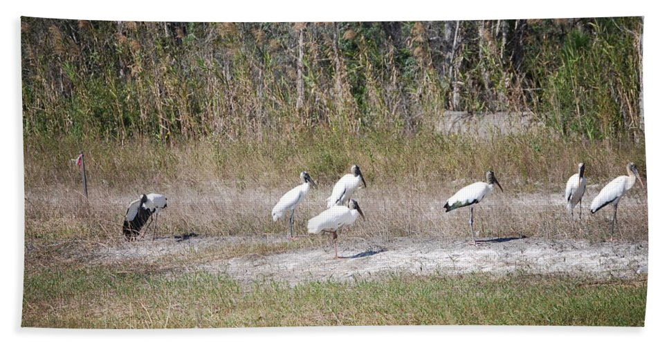 Resting Hand Towel featuring the photograph Wood Storks by Robert Floyd