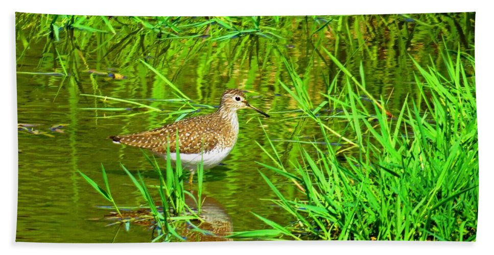 Solitary Sandpiper Hand Towel featuring the photograph Solitary Sandpiper by MTBobbins Photography