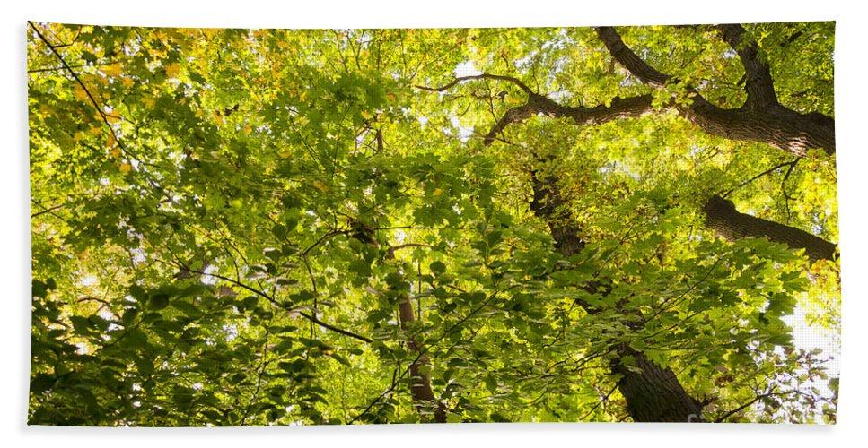 Green Bath Sheet featuring the photograph Woodland Background 02 by Antony McAulay