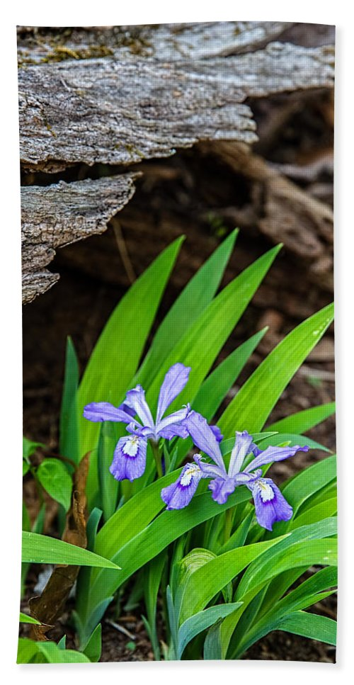 Iris Hand Towel featuring the photograph Woodland Dwarf Iris Wildflowers by John Haldane