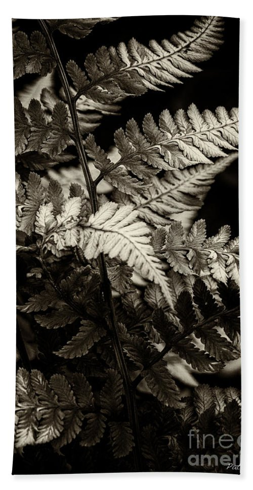 Fern Hand Towel featuring the photograph Woodland Fern by Pat Lucas
