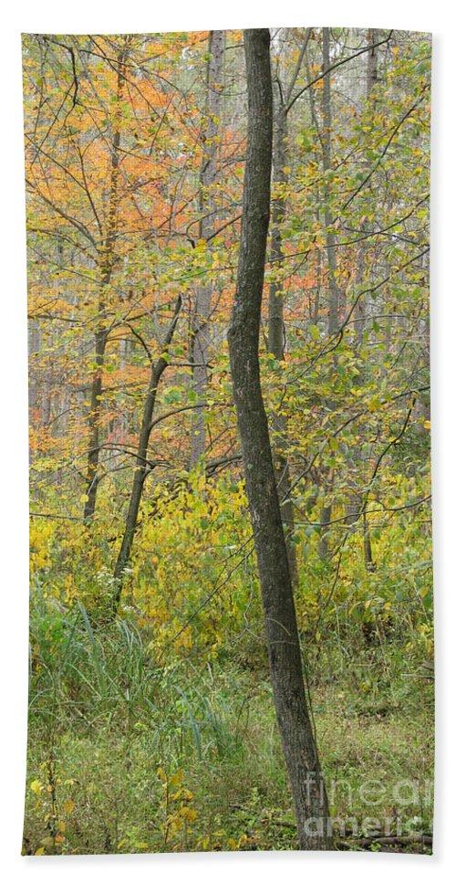 Autumn Bath Sheet featuring the photograph Woodland Interior by Ann Horn