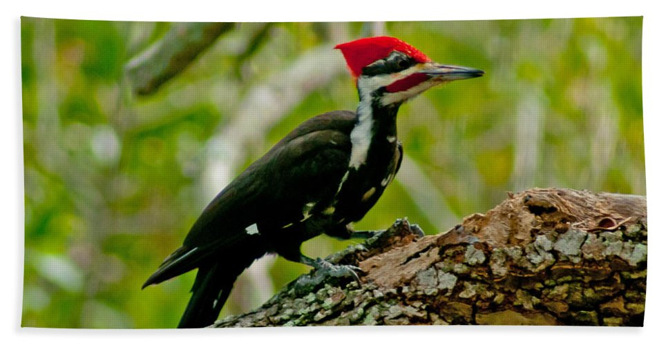 Florida Bird Hand Towel featuring the photograph Woodpecker On A Limb by Stephen Whalen