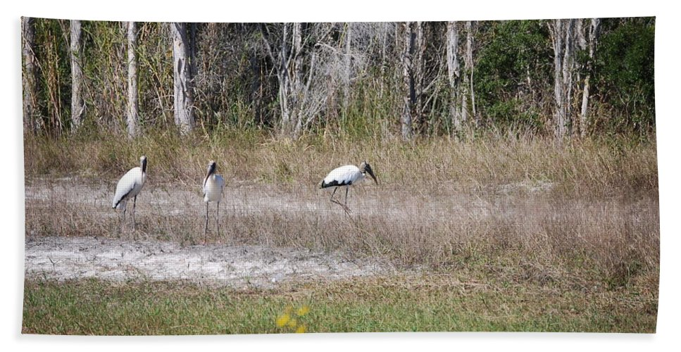 Grazing Hand Towel featuring the photograph Woodstork by Robert Floyd