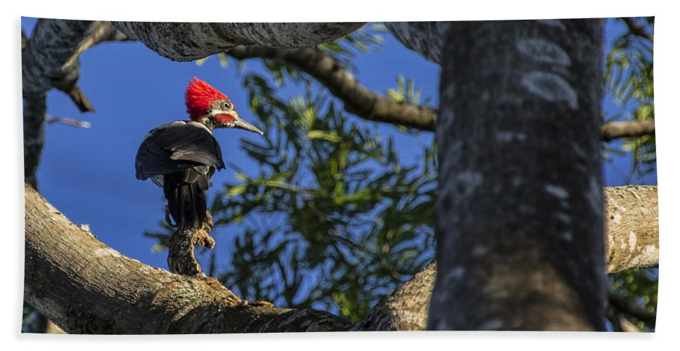 Woodpecker Hand Towel featuring the photograph Woody Woodpecker by David Gleeson