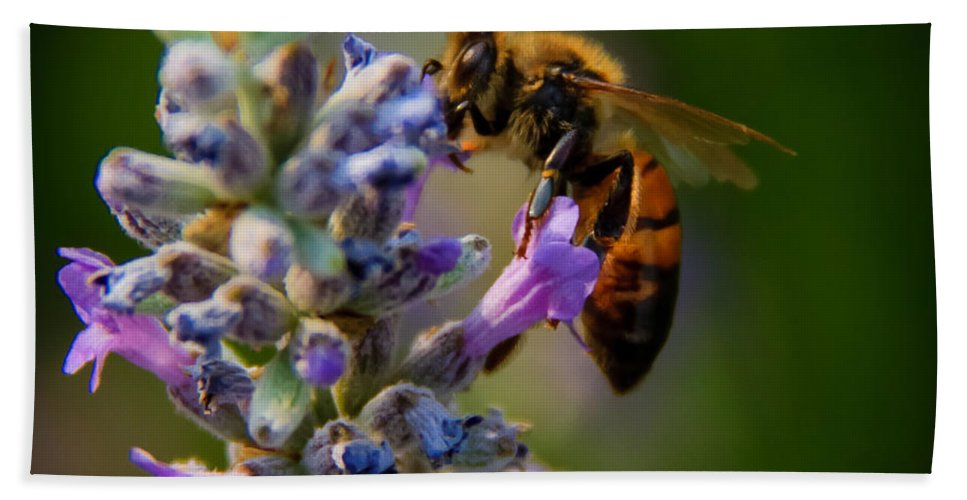 Animals Bath Sheet featuring the photograph Worker Bee by Robert Bales