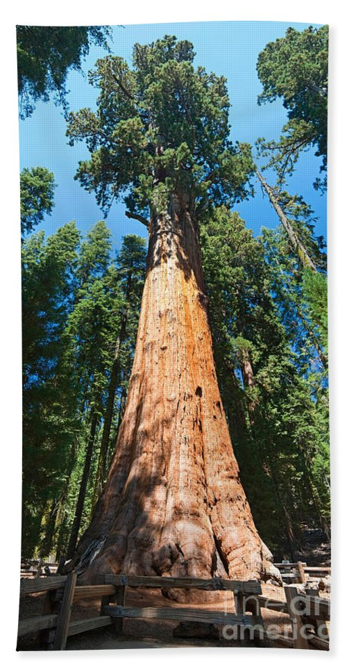 General Sherman Bath Sheet featuring the photograph World Famous General Sherman Sequoia Tree In Sequoia National Park. by Jamie Pham