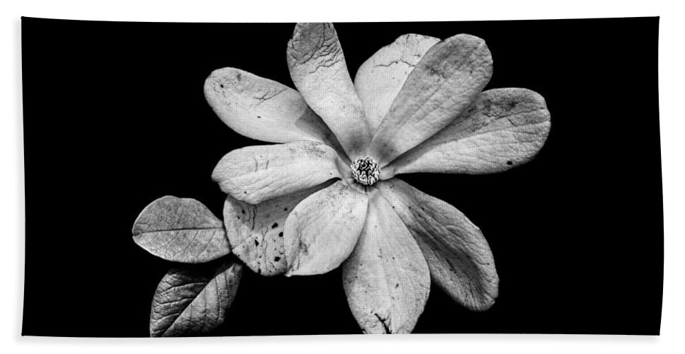 Wounded White Magnolia Hand Towel featuring the photograph Wounded White Magnolia Wide Version Black And White by Weston Westmoreland