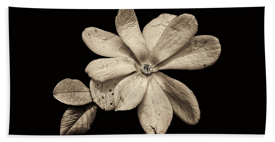 Wounded White Magnolia Hand Towel featuring the photograph Wounded White Magnolia Wide Version Sepia by Weston Westmoreland
