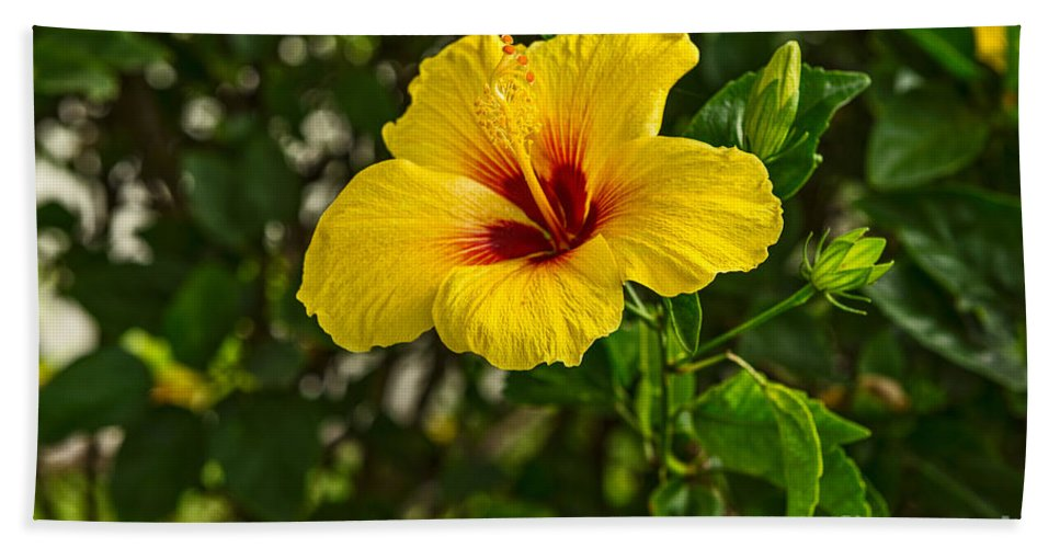 Hibiscus Hand Towel featuring the photograph Yellow - Beautiful Hibiscus Flowers In Bloom On The Island Of Maui. by Jamie Pham