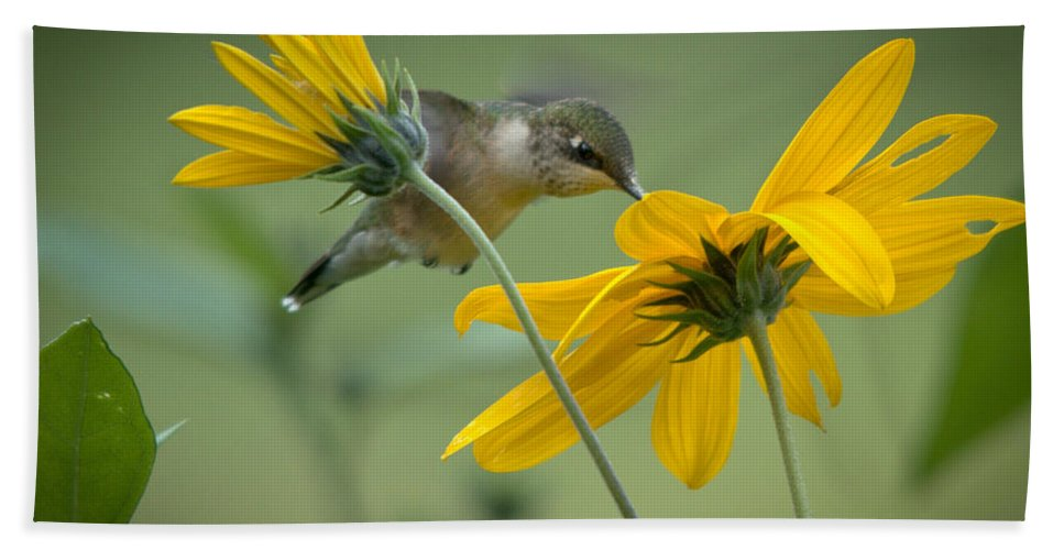 Ruby-throated Hummingbird Hand Towel featuring the photograph Yellow And Green by Cheryl Baxter