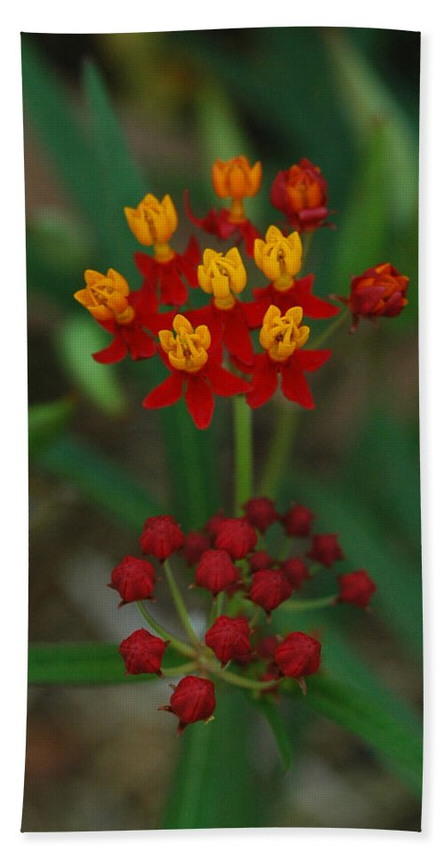Flowers Bath Sheet featuring the photograph Yellow And Red Flowers by Michael Kirk