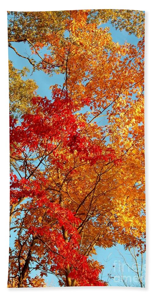 Autumn Hand Towel featuring the photograph Yellow And Red by Patrick Shupert