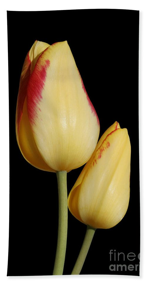 Tulip Hand Towel featuring the photograph Yellow And Red Tulips by Judy Whitton
