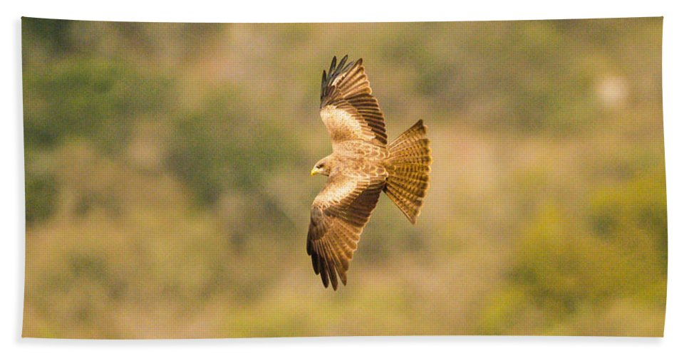 Africa Bath Sheet featuring the photograph Yellow Billed Kite 7 by Alistair Lyne
