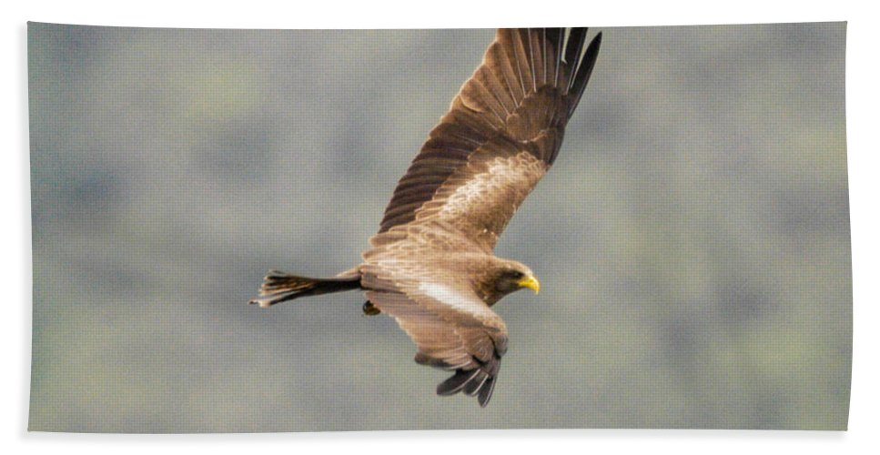 Africa Bath Sheet featuring the photograph Yellow Billed Kite 8 by Alistair Lyne