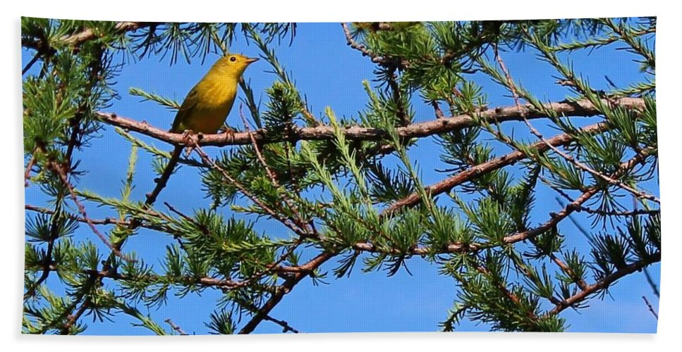 Yellow Bird In A Juniper Tree Bath Sheet featuring the photograph Yellow Bird In A Juniper Tree by Barbara Griffin