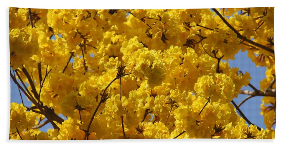 Tree Bath Sheet featuring the photograph Yellow Blossoms Of A Tabebuia Tree by Denise Mazzocco