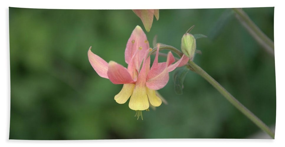 Flower Bath Towel featuring the photograph Yellow Columbine by Frank Madia
