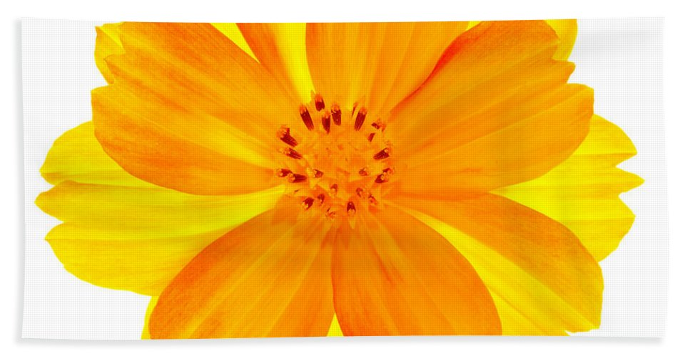 Cosmos Bath Sheet featuring the photograph Yellow Cosmos by Robert Woodward
