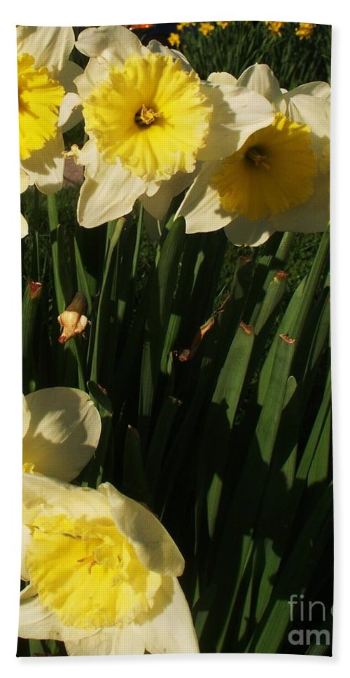 Flowers Hand Towel featuring the photograph Yellow Day Lilies by Eric Schiabor