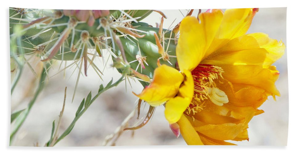 Diana Graves Photography Hand Towel featuring the photograph Yellow Desert Flower by K D Graves
