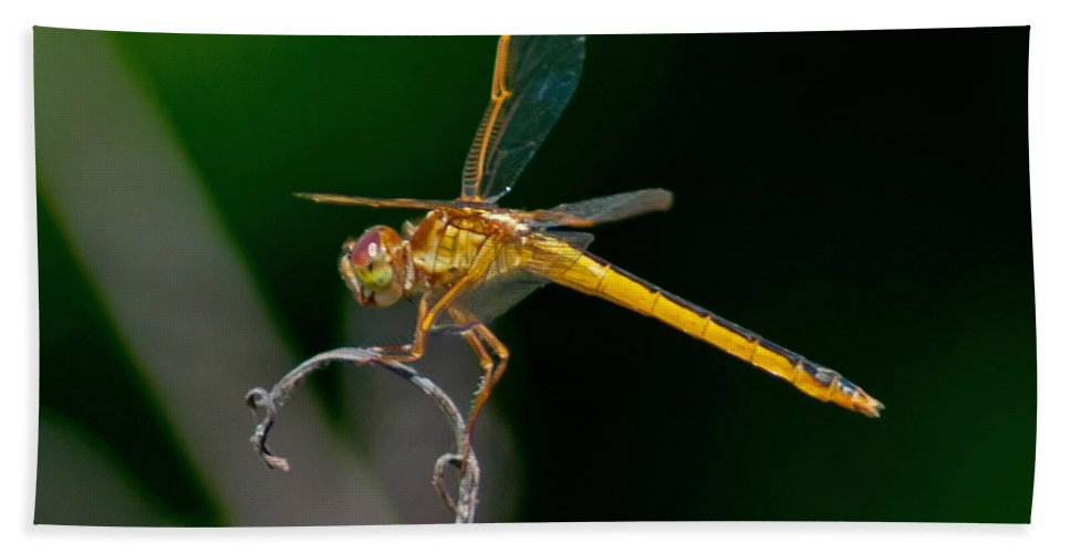 Dragonfly Bath Sheet featuring the photograph Yellow Dragonfly by Stephen Whalen