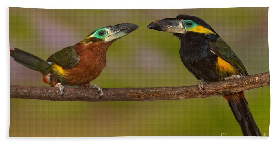 Animal Hand Towel featuring the photograph Yellow-eared Toucanet Pair by Anthony Mercieca