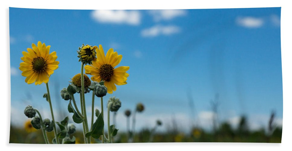 Yellow Bath Towel featuring the photograph Yellow Flower On Blue Sky by Photographic Arts And Design Studio